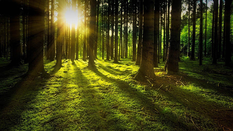 Labellisations PEFC, Blaue Engel, RAL 430 et ISO pour les bois utilisés par Ecocuisine
