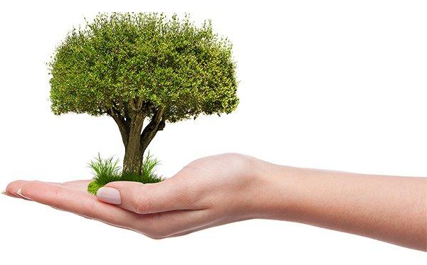 Développement durable : nos cuisines se mettent au vert